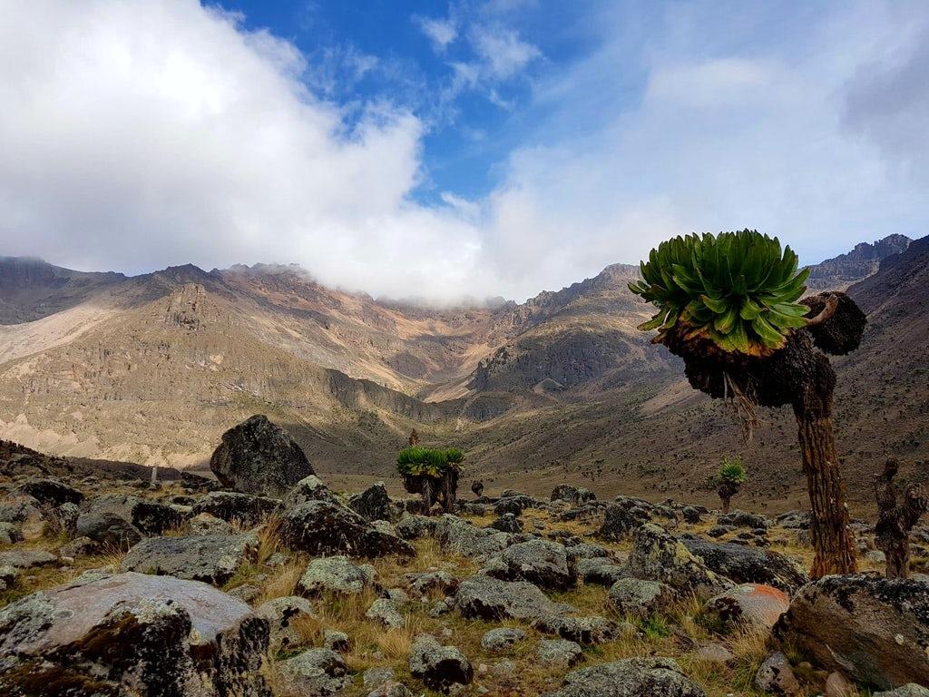 Zajímavé rostlin prosperující na hoře Mout Kenya