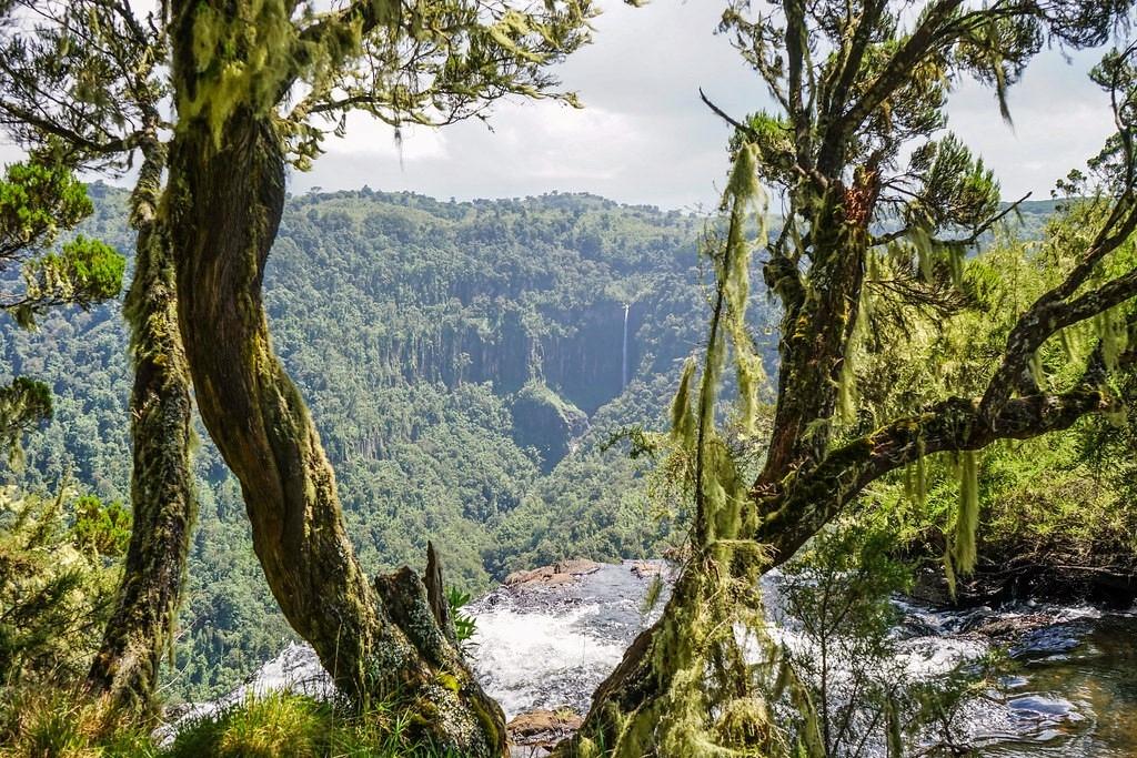 Národní park Aberdare - lesy a voda