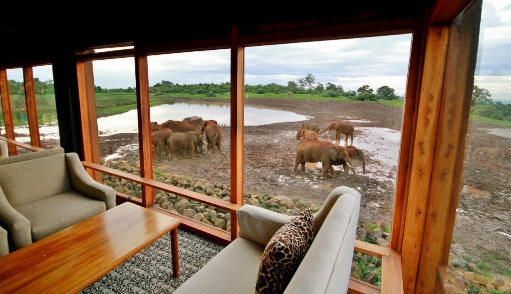 Pozorovat zvířata můžete i z pohodlí hotelu