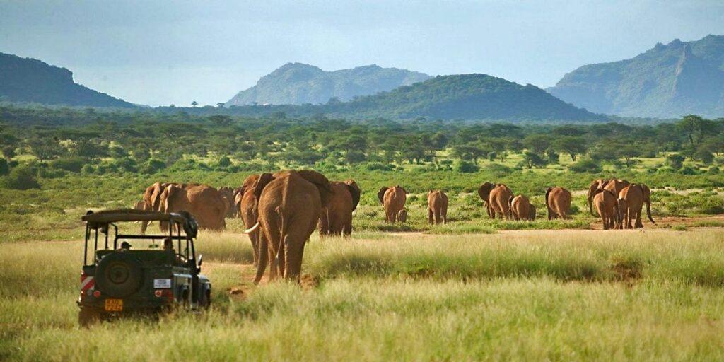 Národní parky v Keni - sloni v Samburu