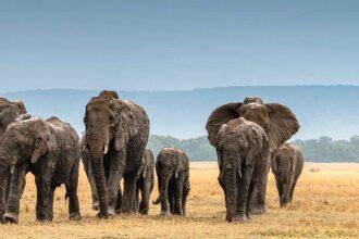 Safari nejen v Masai Mara