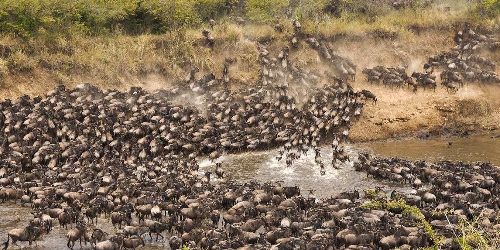 Překonávání řeky Mara během Velké migrace pakoňů