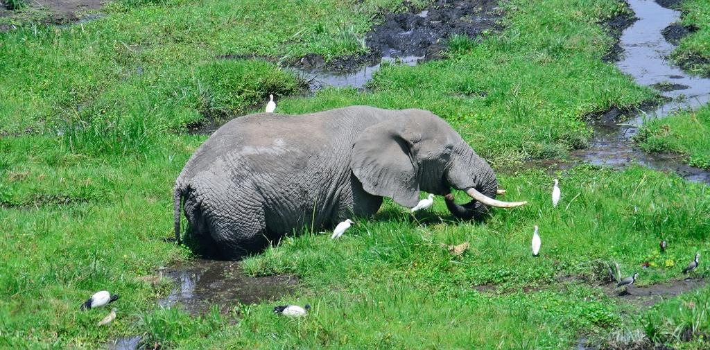 Bažiny a mokřady jsou oblíbeným místem nejen pro slony