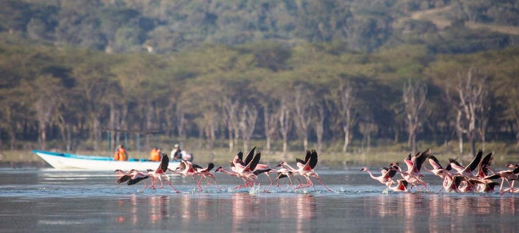 Plameňáci na jezeře Naivasha