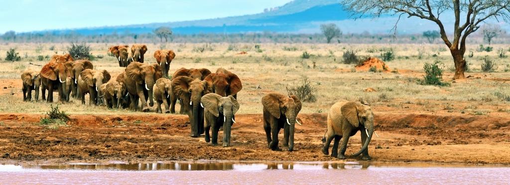 Národní park Tsavo East