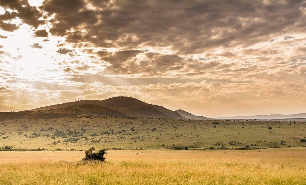 Scenérie národního parku Masai Mara